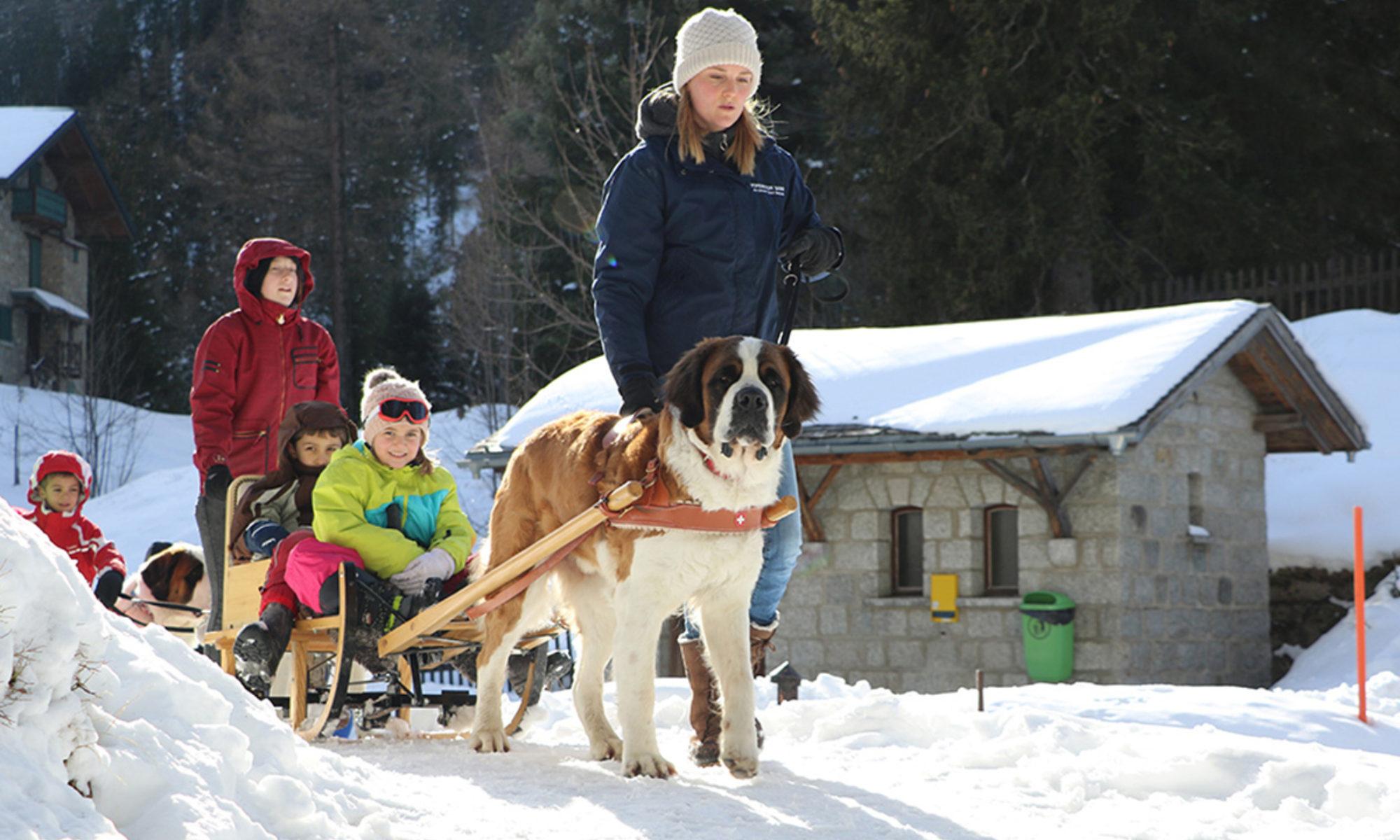 La Fondazione Barry Al Servizio Dei Cani Di San Bernardo